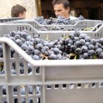 Visita Finca + Bodega + Degustación 3 vinos