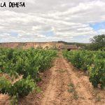 La-Dehesa.-Paco-García
