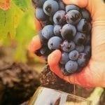 Visita + Cata en las viñas
