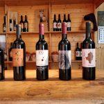 Cata de los vinos de Aibar