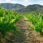 Cata en la viñas