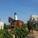 excursió-entre-vinyes-a-cavall