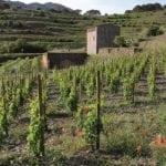 Visita a las Viñas, bodega y cata